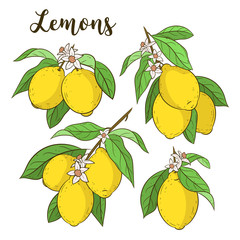 Lemons set. Cute vector illustrations. Cartoon style. Lemon branches. Citrus collection. Hand drawn isolated on white.