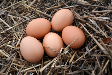 brown chicken eggs in the straw, food, agriculture