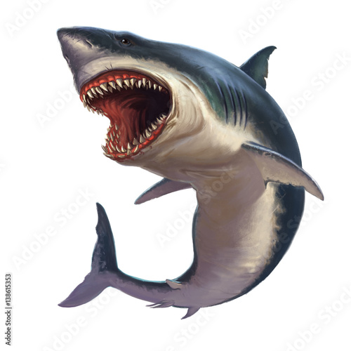 Great white shark on a white background