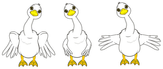 animal, cartoon, white, rubs, farm, bird, goose, long neck, sizzle, wings, quack, stand, three, difeerent, posture, fly