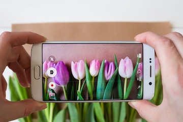 female hands taking a picture of beautiful fresh tulips with smartphone