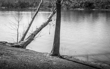 Park Tree Ladder and Swing Rope Black and White:  Black and white picture of a park tree ladder and swing rope stretching out onto the Coosa River in Wetumpka, Alabama.