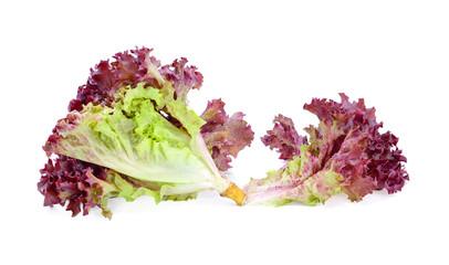 Red oak lettuce on white background
