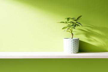 グリーンの壁と棚の室内イメージ