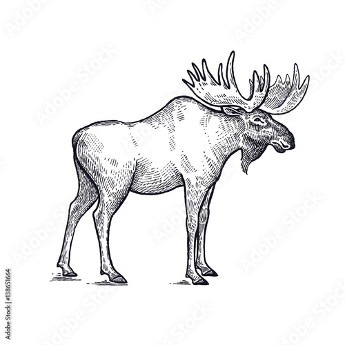 quotmoose forest animals illustrationquot stock image and