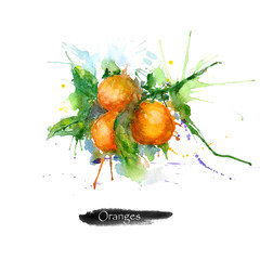 Watercolor fruits painting. Orange fruit isolated on white background.Watercolor food illustration.