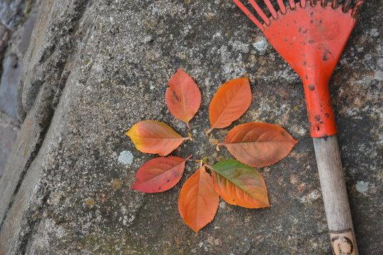 Herbstfärbung 6