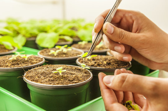 Young student selects plants in laboratory environment