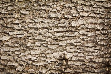 Fototapeta Bieszczady, kora drzewa  obraz