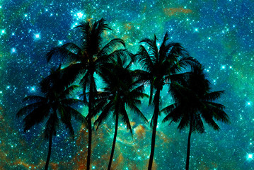 Palm trees silhouettes, starry night background Wall mural