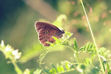Brown butterfly sitting on wildflower