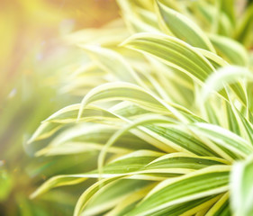 abstract nature greenery background