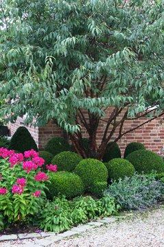 Buchsbaumkugeln im Garten