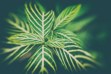 Tropical green leaf texture background, Vintage tone