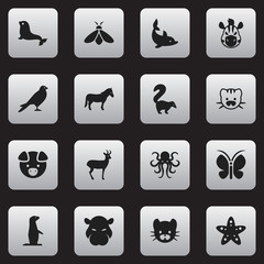 Set Of 16 Editable Zoology Icons. Includes Symbols Such As Playful Fish, Skunk, Honey And More. Can Be Used For Web, Mobile, UI And Infographic Design.