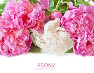 Beautiful peony flowers isolated on white