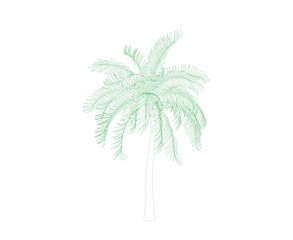 Palm tree. Isolated on white background. Sketch illustration.