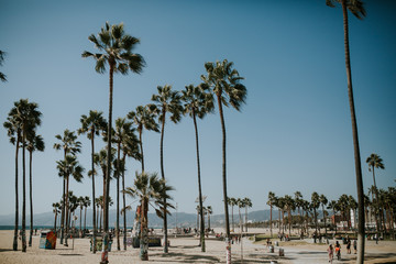 palmtrees in california
