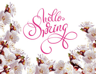 white spring flowers on a branch and text Hello Spring. Calligraphy lettering