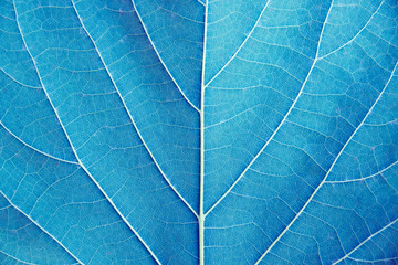 Close up leaf detail (Blue tone filter style)