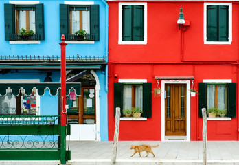 A red cat and colorful buildings in Burano, Venice, Italy