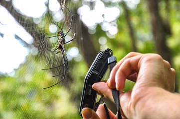 Traveler taking pictures of a large tropical spider