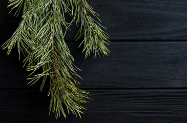 Pine branch on the wooden desk