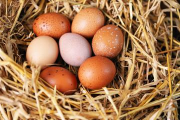 seven eggs in nest
