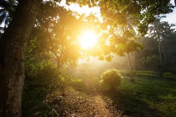 Sunset in Thailand,unknown path on koh Phangan island