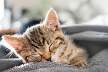 kleine Katze schläft