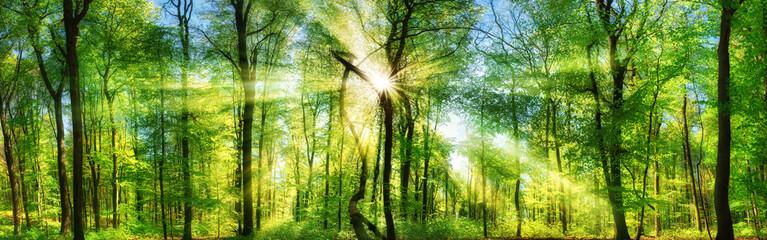 Wall Mural - Frisch grüner Wald, verzaubert von Sonnenstrahlen, Landschaft Panorama