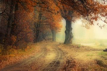 Fototapeta Jesień w lesie. obraz