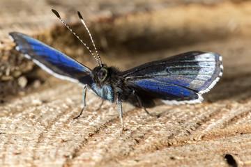 Butterfly on tree trunk macro photo