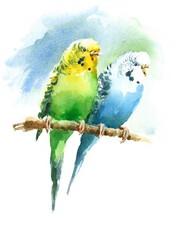 Watercolor Pet Birds Green and Blue Budgerigar Parakeets Hand Drawn Summer Tropical Illustration Budgies