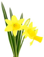 Three yellow flowers.