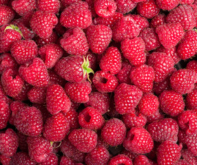 Many sweet fresh raspberry fruit