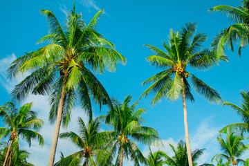 Tropical summer vacation banner background with coconut palm trees on blue sky