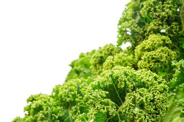 Frischer Grünkohl isoliert