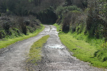 County lane, Waterford Ireland