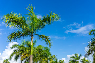 Palm Tress in Paradise