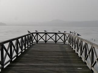 Möwen sitzen auf Seebrücke vor zugefrorenem See