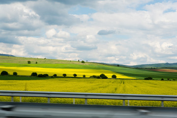 Traveling by the field of yellow rapeseed