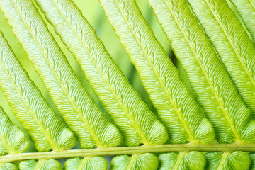 Macro view of nature fern leaf textured