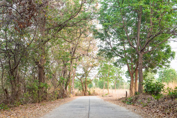 Countryside landscape nature road with tree sideway