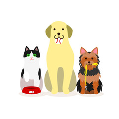 Small group of dogs and cat who needs services