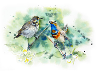 Bluethroat. Pattern with two birds. Decoration with wildlife scene. Watercolor hand drawn illustration