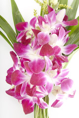 pink orchid and green leaf