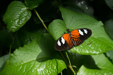 butterfly, butterflies, insect, flowers, plants, trees, nature
