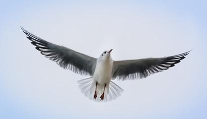 sea bird flying in a cloudy sky.