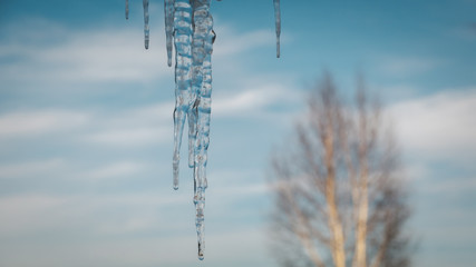 icicles on a background of sky and tree